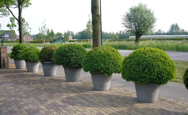 Onderhoud tuin in Maarssen