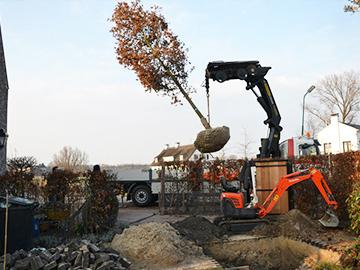 Verwijderen van een boom in de tuin