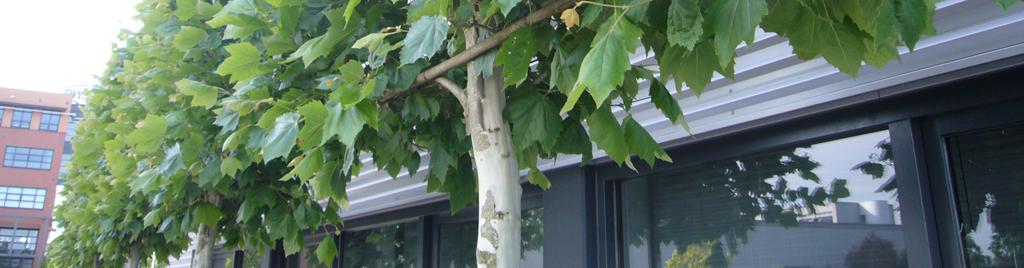 Tuinonderhoud: verzorging en onderhoud van uw tuin, ook voor zakelijke klanten